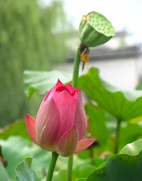 春分花事安排