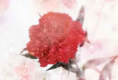 母亲节康乃馨气球手工花束