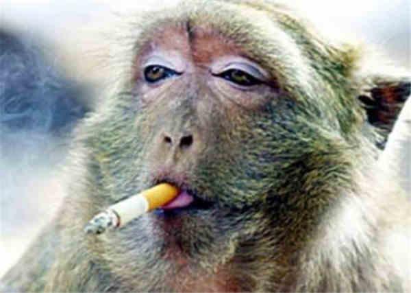 董事长被猴子砸死